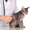 Ветеринарные клиники в Красноармейском